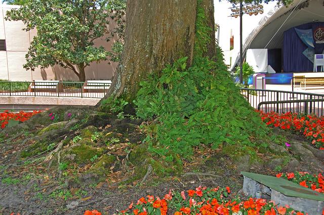 Epcot Tree Stump