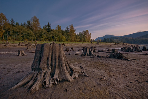 longexposure trees night clouds evening washington dusk reservoir explore treestumps lakebottom manmadelake alderlake mountrainiernp nikond40