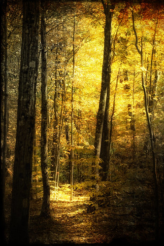 trees light tree texture yellow forest photoshop landscape woods path digitalart peaceful trail hdr 3exp digitalphotoart townsendmassachusetts