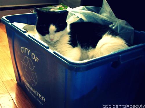 recycle and re-use | by r♥biη elizabeth