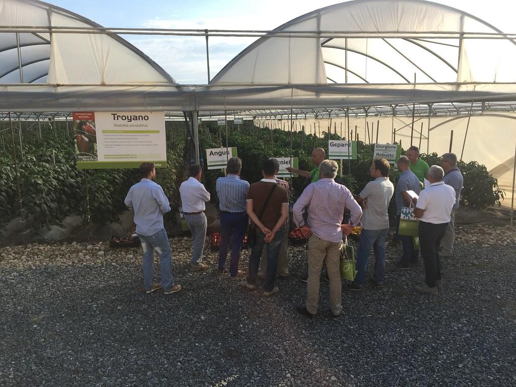 Orticoltura e Valore - prove in campo Peperone 2015 - 2092