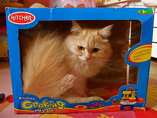 what a present ! cat- alike toy | by ☼Ourania2005