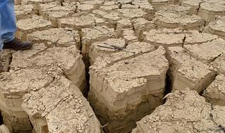Grietas de Desecación 2 / Mud Cracks 2 | by Miguel Vera