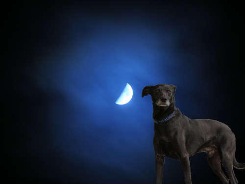 Moondog listening | by erix!
