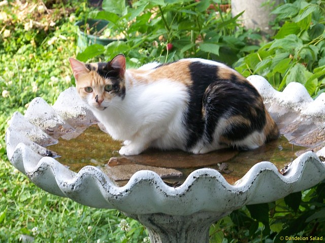 Hattie in the Bird Bath