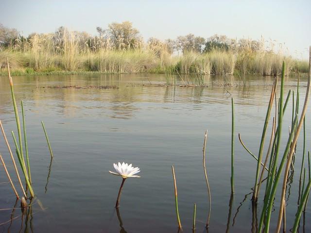 Panorama dell'Okawango (punto di vista della ninfea)