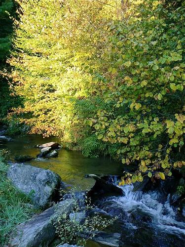 autumn-leaf-change | by GaryAScott