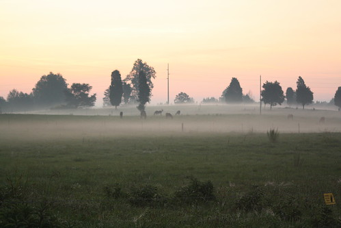 trees horse field fog nc pasture catawbacounty
