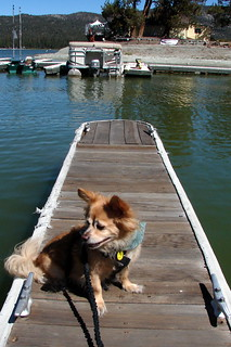 Sittin' On The Dock Of The Lake | by Jodi K.