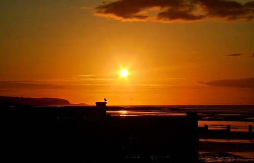uk sea england bird sunrise seaside sand unitedkingdom starling earlyinthemorning groynes bexhill breakwaters hastingspier notasunset abigfave coastuk larigan phamilton welcomeuk