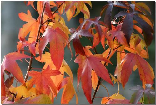 Autumn - 2008 [4]