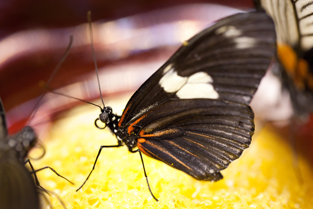 Butterfly Palace 5826