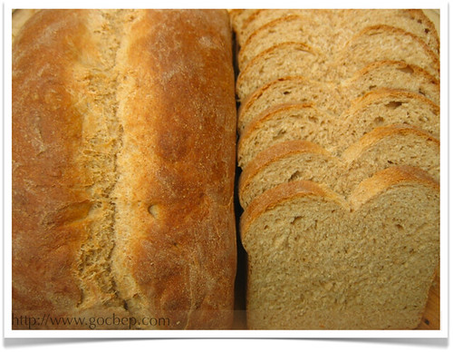 Whole Wheat Bread | by van_pham