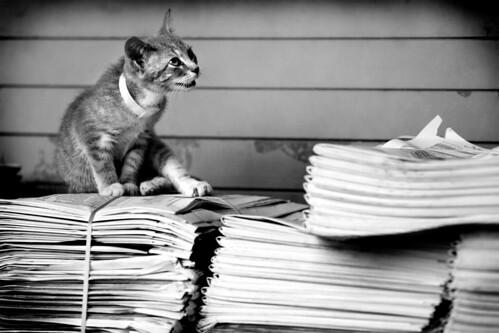 newspaper kitty | by Brit.