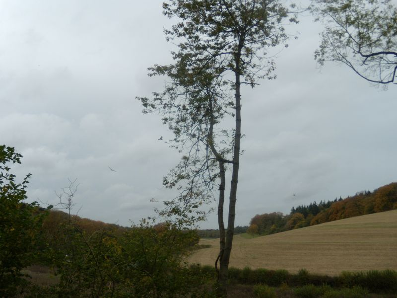 tree, 2 kites Goring circular