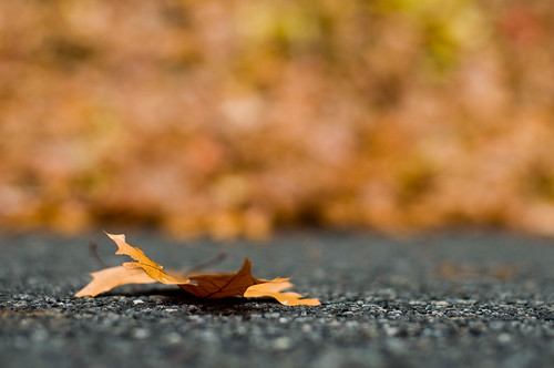 road autumn ny newyork fall leaf nikon meme nikkor seagate westchester westchestercounty 50mmf14ai d90 kitchawan project365 nikond90 project365nov2008 twtme2008