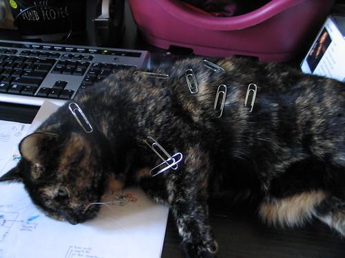 stuff on my cat Turtle | by adria.richards
