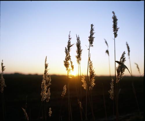 england mamiya sunrise 6x7 publish rb67