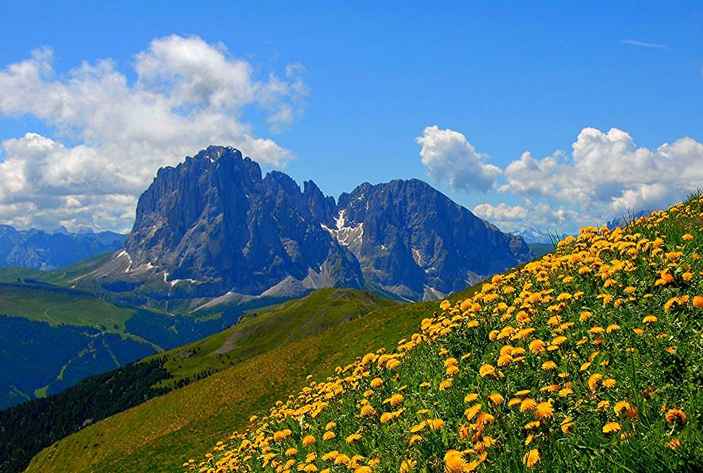 Fiori e montagne