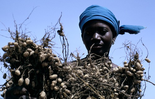 Peanuts   by World Bank Photo Collection