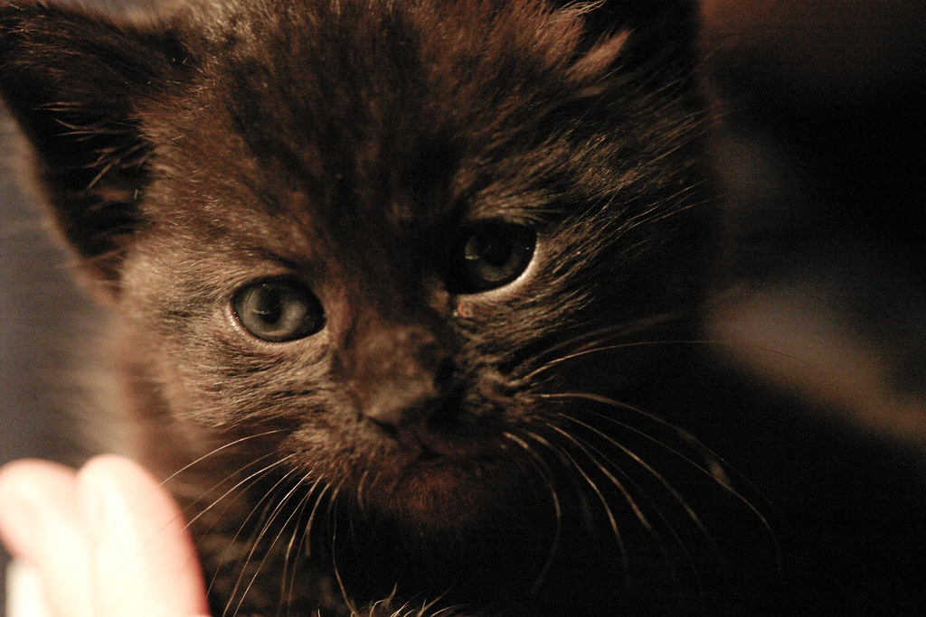 kitty_face