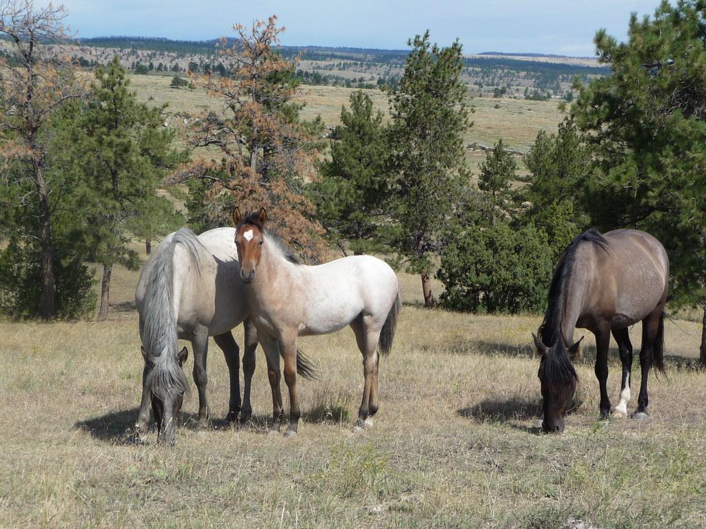 Black Hills Wild Horse Sanctuary Heidimd Flickr