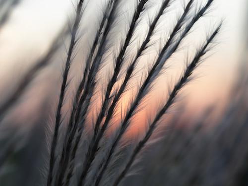 sunset sun grass minnesota peach rochester prairie bigblue sooc zuiko50mmf2