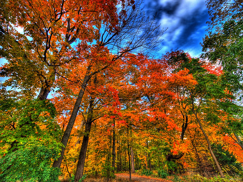 autumn falls... | by paul bica