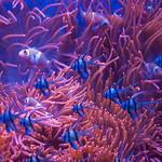 Nemo e i suoi amici