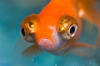 Why so glum?? | by Benson Kua