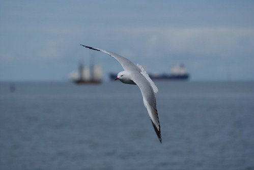 Sea-gull | by ncole458