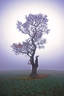 Brrrr.....Maria's Tree..... | by Dave Hanmer