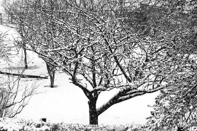 imgp5409 - Snow