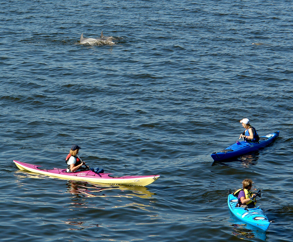 Dolphins in the Navesink River
