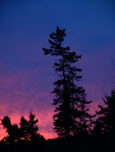 trees canada eh sunrise newbrunswick spruce saintjohn rothesay nbphoto