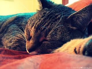 tuckered out | by r♥biη elizabeth