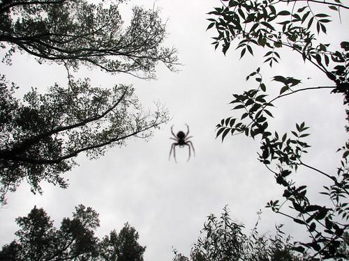 Spider and Trees Pettigrew SP 8258