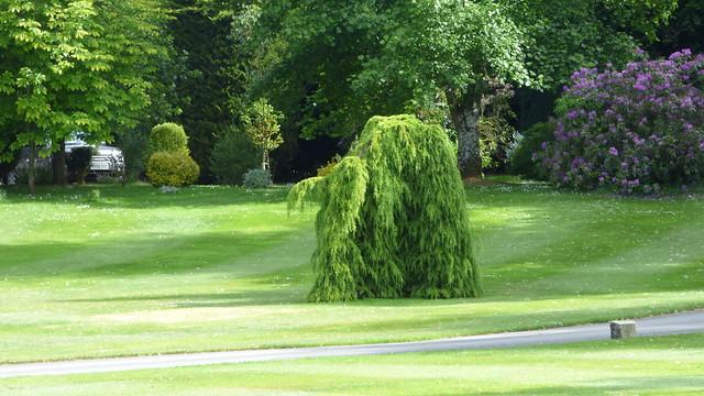 Avington Park, Winchester, Hampshire. This tree has many guises....
