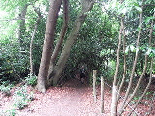 Path in Brockhurst Wood SWC Walk 189 Beeches Way: West Drayton to Cookham