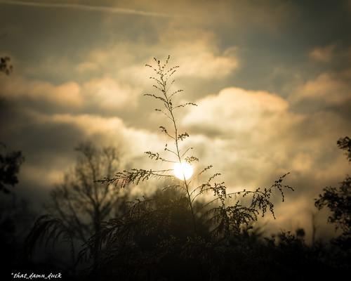 sunrise dawn nature clouds trees plants