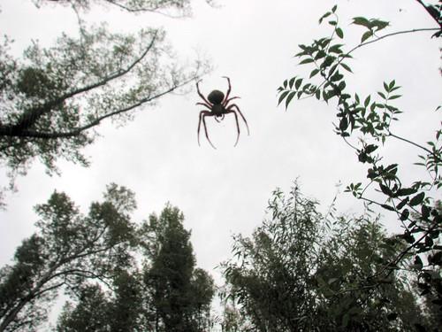 Spider and Trees Pettigrew SP 8256