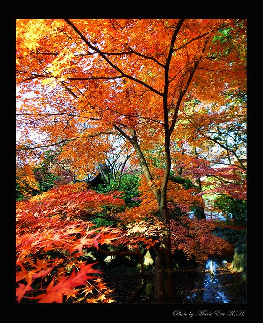 Autumn colours    Ready?