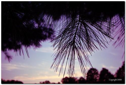 fall canon landscape evening outdoor catchycolorsgreen catchycolorspurple 10mm22mm 40d