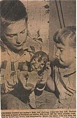 healthy-pet-lions | by GaryAScott