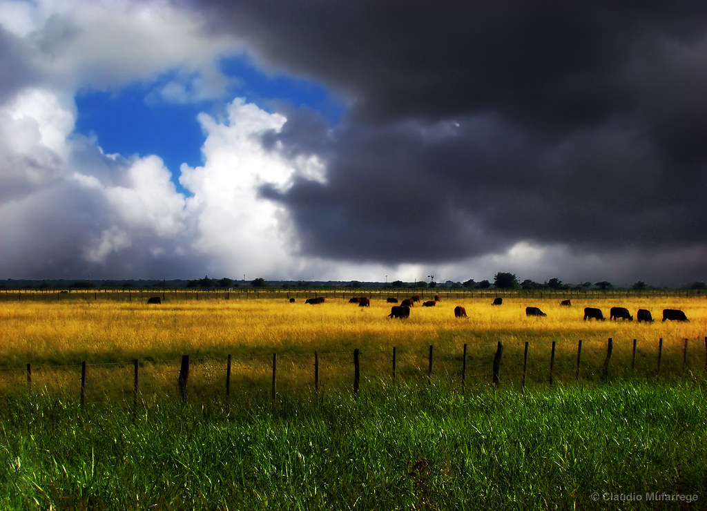 Cielos y campos de la pampa Argentina / Skies and fields from Argentina's pampa