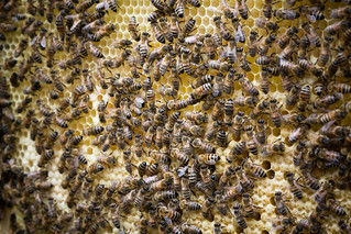 Bienenstock   by gedankenstuecke