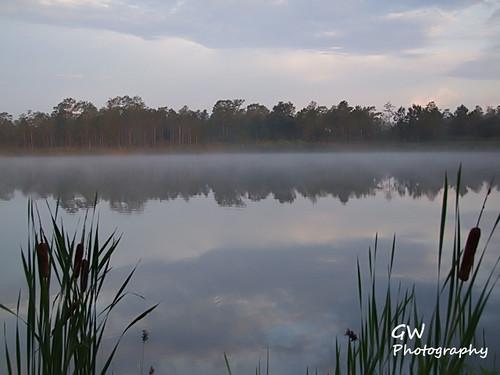bear forest pond fuji seminole s100fs