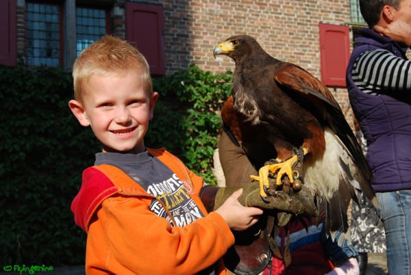 The hawk 2
