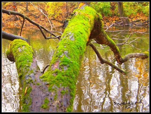 over the stream