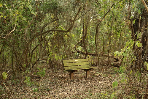 The Golden Bench | by arsheffield